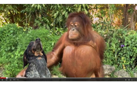 US発★2015年最もシェアされた広告はグーグル「Friend Furever」