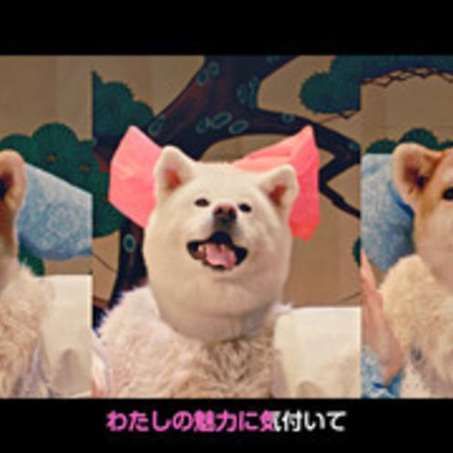 秋田犬がアイドルグループに変身!?   県のPRビデオ公開   センターは夏子ちゃん?