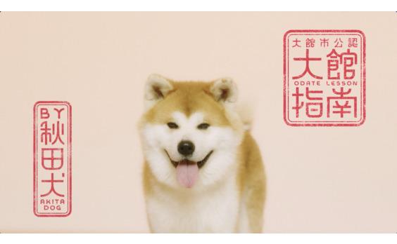 """大館市「秋田犬の里」グランドオープン  ウェブ動画でも""""モフモフ""""発信!"""