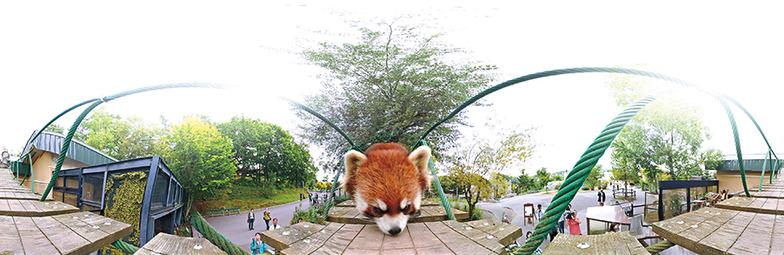 東京・小平市のゆたか保育園で「いどう型動物園」