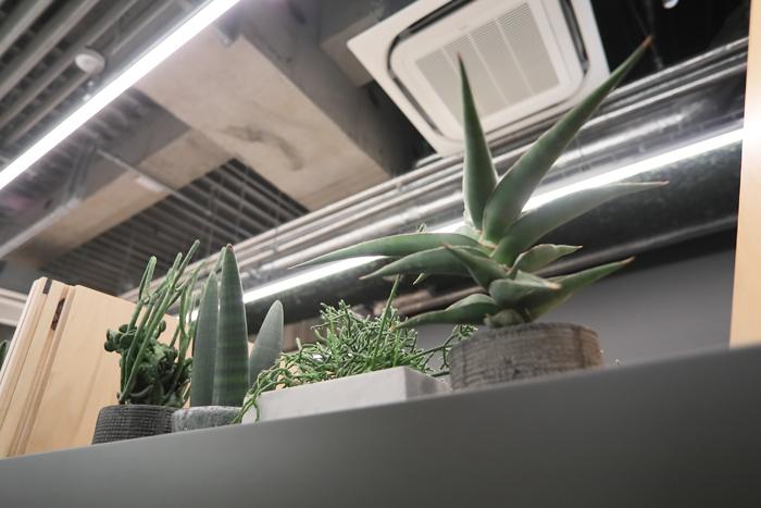 Think Lab内の植栽の様子