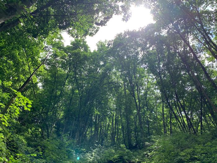 飛騨の森。写真はヒダクマの社有林