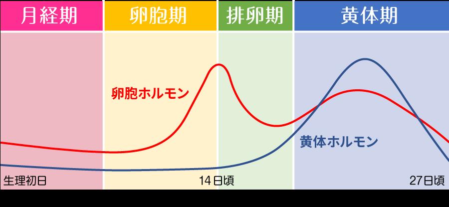 「月経期」「卵胞期」「排卵期」「黄体期」のサイクル図