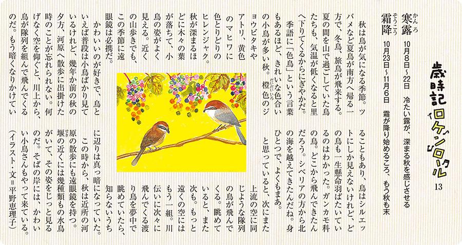 寒露10月8日~22日 冷たい露が、深まる秋を感じさせる 霜降10月23日~11月6日 霜が降り始めるころ、もう秋も末  秋は鳥が気になる季節。ツバメなど夏鳥が南方へ帰る一方で、冬鳥、旅鳥が飛来する。夏の間を山で過ごしていた鳥たちも、気温が低くなると里へ下りてくるからにぎやかだ。季語に「色鳥」という言葉もあるほど、きれいな色合いの小鳥が多い秋。橙だいだい色いろのジョウビタキやアトリ、黄色のマヒワに色とりどりのヒレンジャク。秋が深まるほどに木々の葉が落ちて、小鳥の姿がよく見える。近くの山歩きでも、この季節に遠眼鏡は必携だ。かわいいのが好きで、鳥といえば普段は小鳥ばかり見ているけれど、幾年か前の秋の夕方、河原へ散歩に出掛けた時のことが忘れられない。何げなく空を仰ぐと、川上から、鳥が隊列を組んで飛んでくるのだ。もう暗くなりかけていることもあり、鳥はシルエットにしか見えないけれど、どの鳥も一生懸命羽ばたいているのはわかった。ガンカモ科の鳥。どこから飛んできたんだろう。シベリアの方から北の海を越えてきたんだね。身ひとつで、よくもまあ。と思っていると、次にまた上流の空に同じような隊列の鳥が飛んでくる。眺めていると、また次も。もっと遠くの空にはもう一組。川伝いに次々に飛んでくる渡り鳥を夢中で眺めていたら、知らないうちに辺りは真っ暗になっていた。この時から、秋は近所の河原の散歩にも遠眼鏡を持つ。堰の近くには幾種類もの水鳥がいて、その姿をじっと見るのだ。そばの岸には、かわいい小鳥さんもやって来ている。(イラスト・文=平野恵理子)
